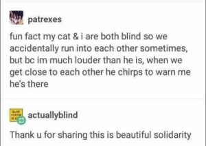 If that isn't solidarity: patrexes  fun fact my cat & i are both blind so we  accidentally run into each other sometimes,  but bc im much louder than he is, when we  get close to each other he chirps to warn me  he's there  BUIND  PERSON  IN A  actuallyblind  Thank u for sharing this is beautiful solidarity If that isn't solidarity