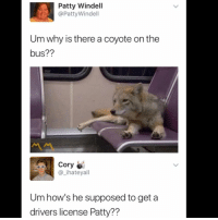 Memes, Coyote, and 🤖: Patty Windell  @PattyWindel  Um why is there a coyote on the  bus??  Cory  @_ihateyall  Um how's he supposed to get a  drivers license Patty?? 😩
