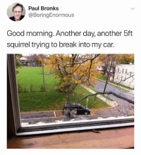 Memes, Good Morning, and Break: Paul Bronks  @BoringEnormous  Good morning. Another day, another 5ft  squirrel trying to break into my car.  LI  吓. I have many questions