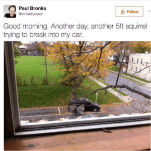 Memes, Good Morning, and Break: Paul Bronks  @virtuallydead  Followv  Good morning. Another day, another 5ft squirrel  trying to break into my car. Confusing Perspective. via /r/memes https://ift.tt/2u5O1G9