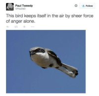 Being Alone, Air, and Paul: Paul Tweedy  Follow  Paul2el  This bird keeps itself in the air by sheer force  of anger alone  13