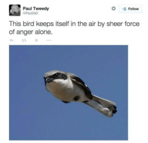 Being Alone, Memes, and Air: Paul Tweedy  @Paul2e  Follow  This bird keeps itself in the air by sheer force  of anger alone  6 13 A N G E R Y via /r/memes https://ift.tt/2QwOQ56