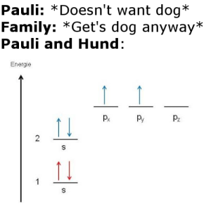Learning german through chemistry memes: Pauli: *Doesn't want dog*  Family: *Get's dog anyway*  Pauli and Hund:  Energie  Py  Pz  2  S  1  S  CD Learning german through chemistry memes