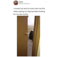 Crying, Memes, and Video: Pavan  @pavanjotsamra  I moved out and my mom sent me this  video saying my dog has been looking  for me, brb crying