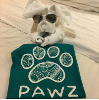 Memes, Mondays, and Thank You: PAW Hey guys we are on vacation this week doing photography for our spring tee collection unfortunately no orders will ship out until this Monday. Thank you for your support and understanding 🐶 if you have any questions or address changes ect. Our customer support reps will still be able to help via DM or pawzhelp@gmail.com