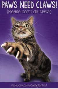 Paws need claws  (Please don't de-claw)    #cats #claws: PAWS NEED CLAWSI  (Please don't de-claw!)  facebook.com/CatingtonPost Paws need claws  (Please don't de-claw)    #cats #claws