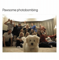 Follow me @hilarious.ted for more animal memes: Pawsome photobombing Follow me @hilarious.ted for more animal memes