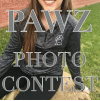 FREE $100 gift card to the winner that sends in the best photo IN THEIR PAWZ Merchandise! AS WELL AS FEATURES TO OUR 427,000 followers! Winner based on: Photo quality & Creativity. Please DM your entry photo or use pawzmodel & tag @pawz (account must be public) 🐶🐾 Winner will be announced Tuesday night at 8pm EST: PAWZ  PHOTO  CONTE FREE $100 gift card to the winner that sends in the best photo IN THEIR PAWZ Merchandise! AS WELL AS FEATURES TO OUR 427,000 followers! Winner based on: Photo quality & Creativity. Please DM your entry photo or use pawzmodel & tag @pawz (account must be public) 🐶🐾 Winner will be announced Tuesday night at 8pm EST
