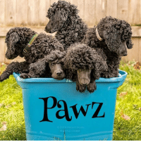 I want a bucket of poodles: Pawz  Rubbermaid I want a bucket of poodles