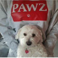 Memes, 🤖, and Red: PAWZ. Thanks @mandy_minchers for support in our red brick hoodie 🐶🐾