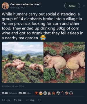 paxamericana: god i wish i was blackout drunk off corn wine in a tea garden in yunan province: paxamericana: god i wish i was blackout drunk off corn wine in a tea garden in yunan province