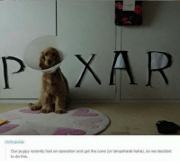 Puppy, Haha, and Got: PAXAR  nic0cacola:  Our puppy recently had an operation and got the cone (or lampshade haha), so we decided  to do this