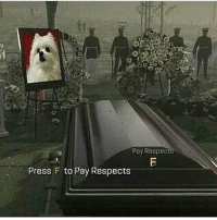 press f to pay respects: Pay Respec  Press F to Pay Respects