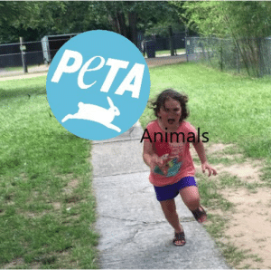 AHHH, Run away!: PCTA  Animals AHHH, Run away!
