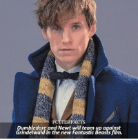 Dumbledore, Memes, and News: PCTTERFACTS  Dumbledore and Newt will team up against  Grindelwald in the new Fantastic Beasts film. NEWS | Pottermore ⠀⠀⠀⠀⠀⠀⠀⠀⠀⠀⠀⠀⠀ — The latest from the studio is that, in the new film, Grindelwald will 'make a dramatic escape' from MACUSA custody, forcing Albus Dumbledore to join the wizarding world's efforts to stop him. – This is the last post for today, sorry for all the FB stuff.