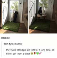 Meme, Pictures, and Time: pe  deebott:  gem-twin-moons:  they were standing like that for a long time, so  then I got them a stool Meme Pictures That Make You Laugh Uncontrollably - 36