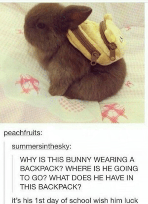 Wish him luck!!: peachfruits:  summersinthesky:  WHY IS THIS BUNNY WEARING A  BACKPACK? WHERE IS HE GOING  TO GO? WHAT DOES HE HAVE IN  THIS BACKPACK?  it's his 1st day of school wish him luck Wish him luck!!