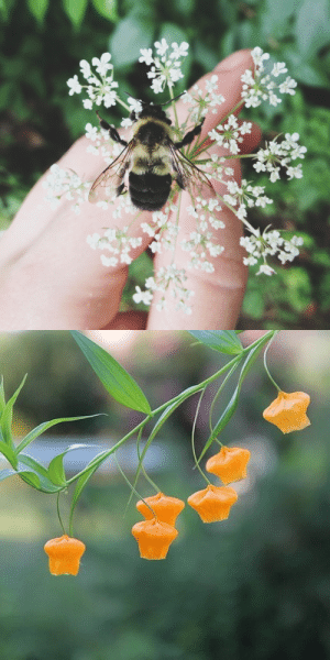 peachyarts:  my best friend sends the cutest little pictures of tiny flowers!!! 🐝 : peachyarts:  my best friend sends the cutest little pictures of tiny flowers!!! 🐝