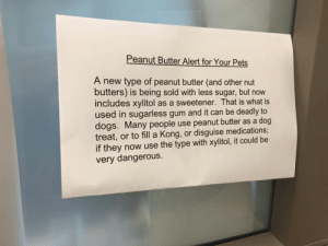 "ainawgsd:  veterinaryrambles:  vaspider:  teamvoorhees:  animal-factbook:  Dog owners please be aware.  REBLOG THIS PLEASE   This is Snopes-confirmed. Also be aware this is very common in sugar free food of many kinds. The retriever puppy who I know of who died of xylitol poisoning got hold of a pack of sugar-free gum.   Always good to remind folks - if it has xylitol, KEEP IT AWAY FROM DOGS!  It induces profound hypoglycemia and liver failure and is life-threatening :(  Friendly reminder to read ALL of the ingredients if you ever give any kind of ""human"" food or table scraps to your pets. : Peanut Butter Alert for Your Pets  A new type of peanut butter (and other nut  butters) is being sold with less sugar, but now  includes xylitol as a sweetener. That is what is  used in sugarless gum and it can be deadly to  dogs. Many people use peanut butter as a dog  treat, or to fill a Kong, or disguise medications;  if they now use the type with xylitol, it could be  very dangerous. ainawgsd:  veterinaryrambles:  vaspider:  teamvoorhees:  animal-factbook:  Dog owners please be aware.  REBLOG THIS PLEASE   This is Snopes-confirmed. Also be aware this is very common in sugar free food of many kinds. The retriever puppy who I know of who died of xylitol poisoning got hold of a pack of sugar-free gum.   Always good to remind folks - if it has xylitol, KEEP IT AWAY FROM DOGS!  It induces profound hypoglycemia and liver failure and is life-threatening :(  Friendly reminder to read ALL of the ingredients if you ever give any kind of ""human"" food or table scraps to your pets."