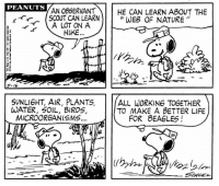 Life, Memes, and Birds: PEANUTS  AN OBSERVANT  HE CAN LEARN ABOUT THE  SCOUT CAN LEARN  WEB OF NATURE  A LOT ON A  HIKE  SUNLIGHT, AIR, PLANTS  ALL WORKING TOGETHER  WATER, SOIL, BIRDS,  TO MAKE A BETTER LIFE  MICROORGANISMS  FOR BEAGLES This strip was published on May 16, 1974. 🌎💚 Happy Earth Day!