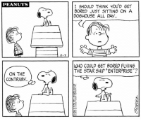 "Bored, Memes, and Star Trek: PEANUTS  I SHOULD THINK yOU'D 6ET  BORED JUST SITTING ON A  DOGHOUSE ALL DAY  2-7  WHO COULD 6ET BORED FLYING  THE STAR SHIP ""ENTERPRISE""?  ON THE  CONTRARY This strip was published on February 7, 1972. Happy 50th Anniversary, Star Trek!"