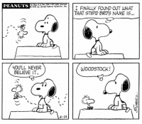 "This strip was published 47 years ago today on June 22, 1970. Although Woodstock first appeared in Peanuts in 1966, this is the first time that Snoopy names him in the strip. He is named after the Woodstock music festival that took place in 1969. ☮️  In an interview Schulz said, ""I had been reading the Life magazine article about the Woodstock festival and I had the little bird in the strip. It was a she and she was Snoopy's secretary and I was doing secretary jokes quite often so then I thought Woodstock would be a good name for this bird and also, it will get the attention of these people that liked that kind of thing. Suddenly, she was not a secretary, she became Woodstock, the boy. It just happened. But that's what's good about a comic strip - you can just do it."": PEANUTS  Tim. Reg. U. S. Pot. O  Ail rights  c 1920 by United feature Srndicote, Inc.  I FINALLY FOUND OUT WHAT  THAT STUPID BIRDS NAME IS...  YOU'LL NEVER  WOODSTOCK!  BELIEVE IT.  JNI  6-22 This strip was published 47 years ago today on June 22, 1970. Although Woodstock first appeared in Peanuts in 1966, this is the first time that Snoopy names him in the strip. He is named after the Woodstock music festival that took place in 1969. ☮️  In an interview Schulz said, ""I had been reading the Life magazine article about the Woodstock festival and I had the little bird in the strip. It was a she and she was Snoopy's secretary and I was doing secretary jokes quite often so then I thought Woodstock would be a good name for this bird and also, it will get the attention of these people that liked that kind of thing. Suddenly, she was not a secretary, she became Woodstock, the boy. It just happened. But that's what's good about a comic strip - you can just do it."""