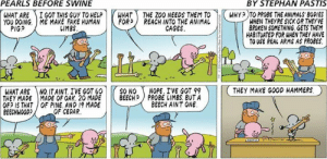 pearls: PEARLS BEFORE SWINE  BY STEPHAN PASTIS  WHAT ARE ) İ GOT THIS GUY TO HELP r HAT -THE ZOO NEEDSTEMT0-KWHyp T PROBETHEANIMALS,BODIES  YOU DOING. ME MAKE FAKE HUMAN |トFOR) REACH INTO THE ANIMAL  WHEN THEYRE SICK OR THEYVE  BROKEN SOMETHING GETS THEM  HABITUATED FOR WHEN THEY HAVE  TO USE REAL ARMS AS PROBES.  PIGS  しIMES  CAGES  WHAT ARE NQ ITAINT IVE GOT 60 | |( SO NO ( NOPE. IVE GOT 99  THEY MADE I MADE OF OAK. 20 MADE | |( BEECH) PROBE IIMBS, BUTA  OF? IS THAT OF PINE AND 19 MADE  BEECHWOOD  THEY MAKE GOOD HAMMERS。  BEECH AINT ONE  OF CEDAR.