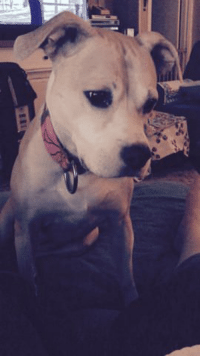 Gif, Love, and Bears: Pebbles loves gummi bears and I love to watch her chew them.