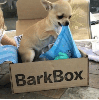 The perfect execution of a veteran unboxing technique: climb INSIDE the box and work your way out BarkBoxDay . Shop BarkBox product from this month's or any previous month's box by following ruv.me-shopbarkbox (in bio)! BarkBox CitySniffers ThrowBarkThursday . ft @cheeky_chis happy belated birthday!! ❤️: ped  Box  Bark The perfect execution of a veteran unboxing technique: climb INSIDE the box and work your way out BarkBoxDay . Shop BarkBox product from this month's or any previous month's box by following ruv.me-shopbarkbox (in bio)! BarkBox CitySniffers ThrowBarkThursday . ft @cheeky_chis happy belated birthday!! ❤️