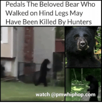Memes, Arrow, and Bear: Pedals The Beloved Bear Who  Walked on Hind Legs May  Have Been Killed By Hunters  watch @pmwhiphop.com Pedals, a disabled bear killed with bow and arrow - FULL STORY AND VIDEO AT PMWHIPHOP.COM LINK IN BIO