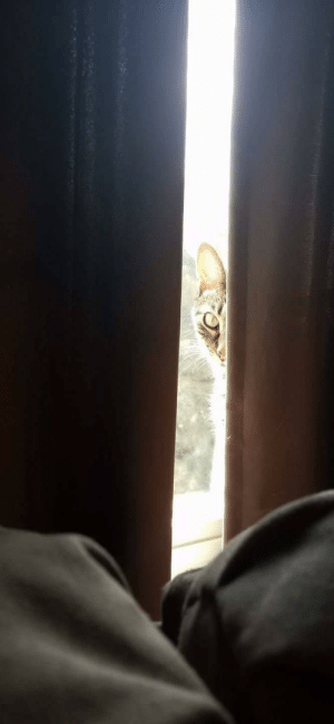 Peek-a-boo. Her name is Spitfire. She knows it and acts accordingly.: Peek-a-boo. Her name is Spitfire. She knows it and acts accordingly.