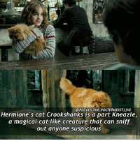 Memes, 🤖, and Creature: @PEEVES THE POLTERGEISTIIIG  Hermione's cat Crookshanks is a part Kneazle,  a magical cat like creature that can sniff  out anyone suspicious. Q- Do you have a pet? Tag a friend! harrypotter potterhead