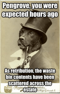 Let's bring back Old Money Dog! I've missed you, buddy.: Pengrove, you were  expected hours ago  Asretribution, the waste  bincontents have been  scattered acrossthe  estate Let's bring back Old Money Dog! I've missed you, buddy.
