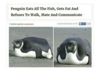 Penguin: Penguin Eats All The Fish, Gets Fat And  Refuses To Walk, Mate And Communicate  1 minute age by oL  e Boed Panda onF