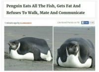 Bored, Panda, and Fish: Penguin Eats All The Fish, Gets Fat And  Refuses To Walk, Mate And Communicate  1 minute ago by OLANDGUNICH  Like Bored Panda on FB: fLike 4.6M Seems relatable