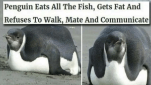 me🐧irl: Penguin Eats All The Fish, Gets Fat And  Refuses To Walk, Mate And Communicate me🐧irl