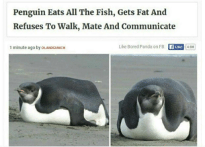 Me irl: Penguin Eats All The Fish, Gets Fat And  Refuses To Walk, Mate And Communicate  Like Bored Panda on FB: A Like  1 minute ago by OLANDGUNICH  4.6M Me irl