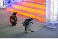 Penguins attend classes on the first day of school at the University of Antarctica, 2007: Penguins attend classes on the first day of school at the University of Antarctica, 2007