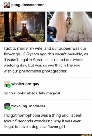 m penguinssonamor Igot to marry my wife, and our pupper was our flower girl. 2.5 years ago this wasn't possible, as it wasn't legal in Australia. It rained our whole wedding day, but was so worth it in the end With our phenomenal photographer. op this looks absolutely magical Iforgot homophobia was a t... #textpost #memes #twitter #spicy #tumblr #textpost #tumblrpost #wholesome #comic #penguinssonamor #igot #marry #wife #pupper #ower #girl #years #ago #wasnt #possible #legal #australia #pic: penguinssonamor  got to marry my wife, and our pupper was our  flower girl. 2.5 years ago this wasn't possible, as  it wasn't legal in Australia. It rained our whole  wedding day, but was so worth it in the end  with our phenomenal photographer.  whales-are-gay  op this looks absolutely magical  traveling-madness  I forgot homophobia was a thing and i spent  about 5 seconds wondering why it was ever  illegal to have a dog as a flower girl  ifunny.co m penguinssonamor Igot to marry my wife, and our pupper was our flower girl. 2.5 years ago this wasn't possible, as it wasn't legal in Australia. It rained our whole wedding day, but was so worth it in the end With our phenomenal photographer. op this looks absolutely magical Iforgot homophobia was a t... #textpost #memes #twitter #spicy #tumblr #textpost #tumblrpost #wholesome #comic #penguinssonamor #igot #marry #wife #pupper #ower #girl #years #ago #wasnt #possible #legal #australia #pic