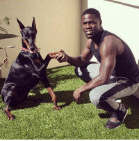Kevin Hart a is known animal lover. His two dogs, Riggs and Roxy, live a life of hilarity with him. Learn more about their antics on our website! >>http:-ow.ly-vwet308AlXF celebritypetworth kevinhart dogs celebritydogs celebritypets cutedogs funny comedian comedy doglove doglovers petlovers animals animalsoftheinternet dogsofinsta dogsofinstagram: penne Kevin Hart a is known animal lover. His two dogs, Riggs and Roxy, live a life of hilarity with him. Learn more about their antics on our website! >>http:-ow.ly-vwet308AlXF celebritypetworth kevinhart dogs celebritydogs celebritypets cutedogs funny comedian comedy doglove doglovers petlovers animals animalsoftheinternet dogsofinsta dogsofinstagram