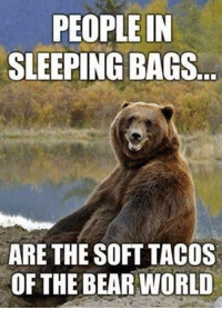 snuggle bear: PEOPLE IN  SLEEPING BAGS  ARE THE SOFT TACOS  OF THE BEAR WORLD
