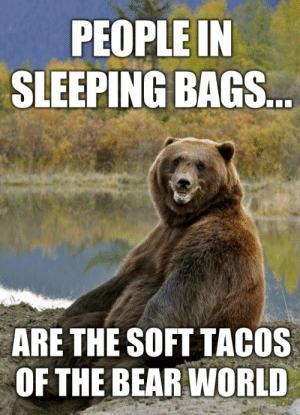 19 Hilarious Grizzly Bear Meme Images and Pictures | MemesBoy: PEOPLE IN  SLEEPING BAGS...  ARE THE SOFT TACOS  OF THE BEAR WORLD 19 Hilarious Grizzly Bear Meme Images and Pictures | MemesBoy
