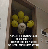 Alien, Doggo, and Steel: PEOPLE OF THE COMMONWEALTH.  DO NOT INTERFERE.  OUR INTENTIONS ARE PEACEFUL.  WE ARE THE BROTHERHOOD OF STEEL. <p>alien doggo</p>