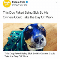 Memes, Twitter, and Work: People  pets  People Pets  @PEOPLEPets  This Dog Faked Being Sick So His  Owners Could Take the Day Off Work  This Dog Faked Being Sick So His Owners Could  Take the Day Off Work @gooddogtails with this gem. I need my dog to do this. (Not that i need an excuse to skip work.) Via @gooddogtails Twitter: peoplepets