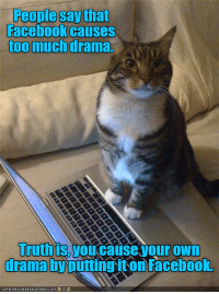 Cats, Facebook, and Memes: People say that  Facebook causes  too much drama.  you cause your own  drama by putting it on Facebook. This cat makes a great point!