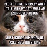 Supposibly: PEOPLE THINKI'M CRAZY WHEN  I TALK WITH MY CAT WHAT AM  SI SUPPOSED TO DO?  JUST IGNORE HIM WHEN HE  ASKS ME A QUESTION?