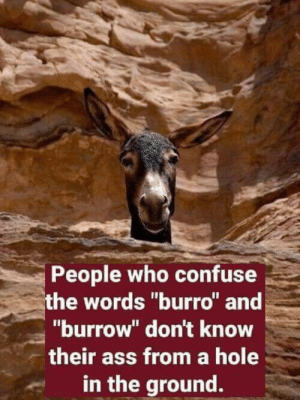 "loloftheday:  Sometimes people get confused: People who confuse  the words ""burro"" and  ""burrow"" don't know  their ass from a hole  in the ground. loloftheday:  Sometimes people get confused"