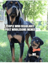 I look up to you guys: PEOPLE WHO REGULARLY  POST WHOLESOME MEMES I look up to you guys