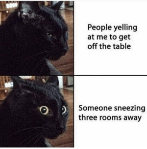 My cat irl: People yelling  at me to get  off the table  Someone sneezing  three rooms away My cat irl