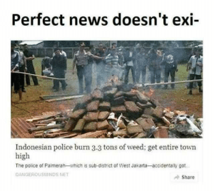 3.3 tons of weed in a small town? Impressive! by 9w_lf9 MORE MEMES: Perfect news doesn't exi-  Indonesian police burn 3.3 tons of weed; get entire town  high  The police of Palmerah-which is sub-district of West Jakarta-accidentally got  DANGEROUSMINDS NET  Share 3.3 tons of weed in a small town? Impressive! by 9w_lf9 MORE MEMES